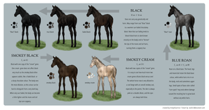 Equine Colour Guide :: Black by MistyofSunrise