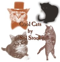 Cool Cats Brushes by SolStock