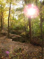 Rocky Forest Background 31 by FantasyStock