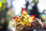 Autumn Light 2