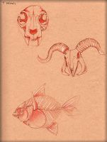Animal Bone Study by LordMaru4U
