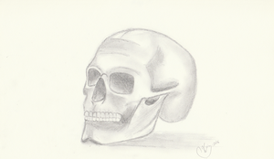Sketch of a skull by getupp