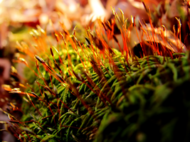 Peculiar Moss by Mulsivaas