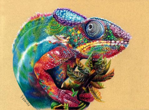 Multicolored chameleon by Verenique