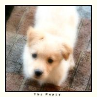 The puppy by everythings-eventual