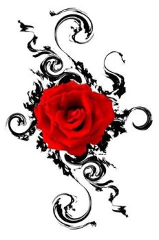 a red rose by rashad53
