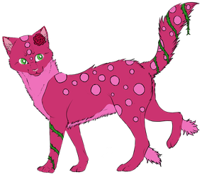 Rose-Cat Adopt | Closed by oOFrosteehOo