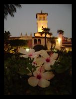 Riviera... and some flowers XD by K1re1