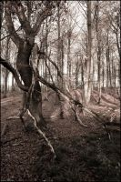 Tree in a forest by sirlatrom