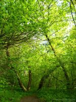 Bright Green by rici66