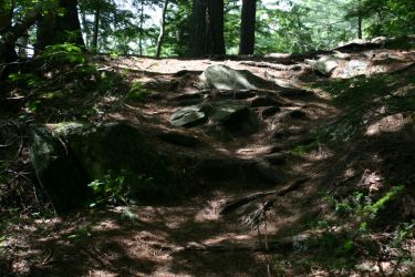 Rocky Root Steps by Healer-Guy