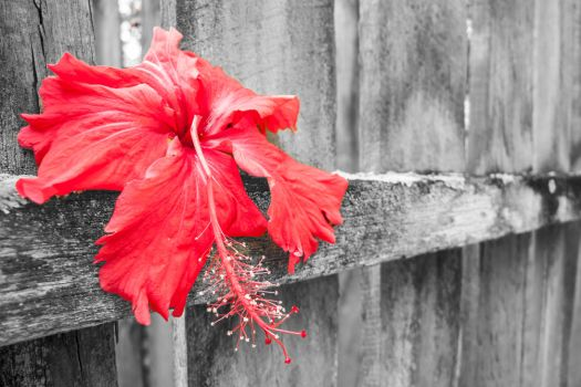 Red With Wood by dp0128