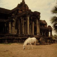 White Angkor Horse by Octavadies