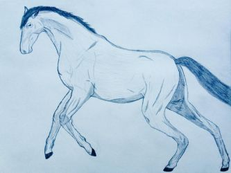 Horse by Coraline12345