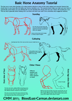 Horse Anatomy Tutorial by CarmanMM-Dirda