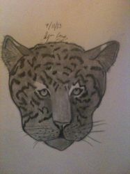 Leopard by ICE46