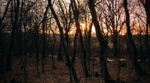 Sunset in the woods by MoonKey19