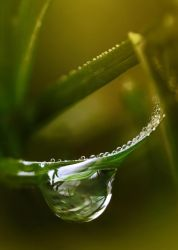 Mother of Drops by thenSir