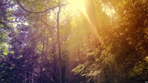 Shining Through. by Sparkle-Photography