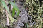 Reunion frog climbing on a branch by A1Z2E3R