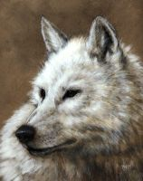 Arctic Wolf by nudge1