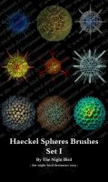 Haeckel Spheres Brushes 01 by the-night-bird
