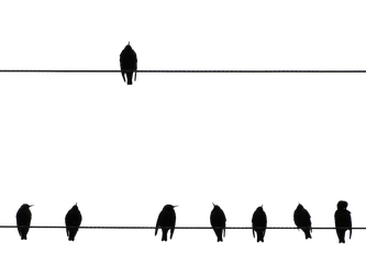 Bird on a Wire PNG by chaseandlinda