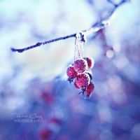.:Frosty Morning:. by RHCheng