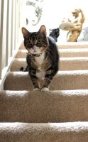Gorn on the Stairs by edwardvb