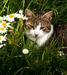 Twiggy in the Grass by Kennelwood
