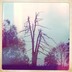 The Dead Tree by loobootoo