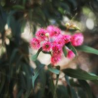 Can you identify this plant? by Unkopierbar