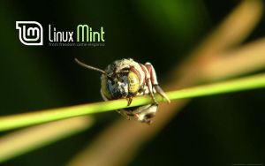 Wallpaper for Mint 8 by malvescardoso