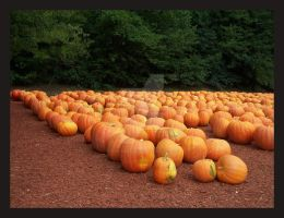Its the Great Pumpkin by SassyPants61762