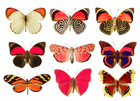 Butterflies png by AbsurdWordPreferred