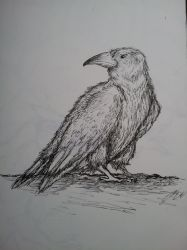 Crow Sketch by AnnaLWagner