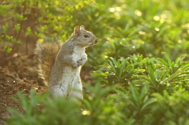 squirrel 2 by thisable