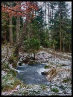 Forest in winter by Alouette-Photos