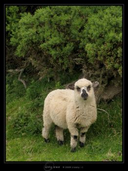 Only Ewe by Crooty