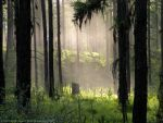 Enchanted Forest by rocamiadesign