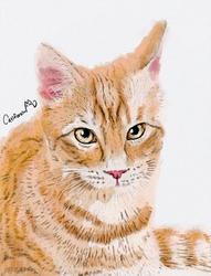Caturday Portrait (July 29th Edition) by Catifornia