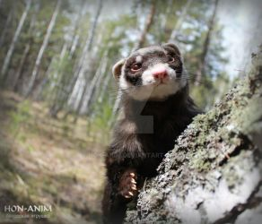 The Ferret - realistic soft toy, my handmade work by hon-anim