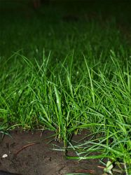 green grass by Sinister-Teddy