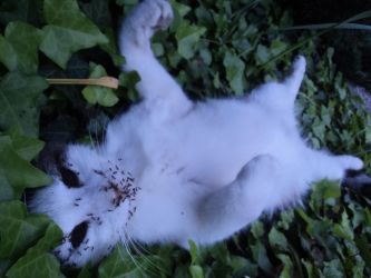 Dead cat with the face devoured by the ants 2/3 by ed---end