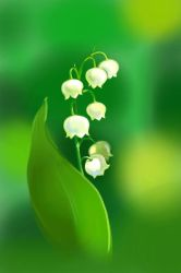 Lily of the valley by Zlobaya
