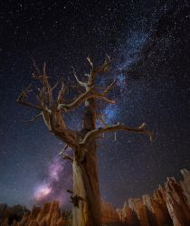 Bryce Canyon, sprouting by alierturk