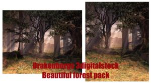 Beautiful forest by 3DigitalStock