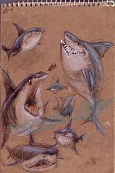 Great Whites by davidsdoodles