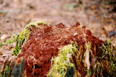 Rotting Stump by envyouraudience