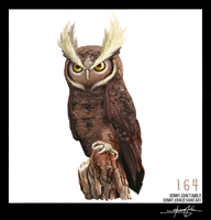 Noctowl!  Pokemon One a Day, Series 2!